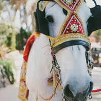 Hello, Horse!