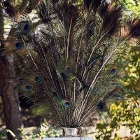 Peacock Feather Centerpiece