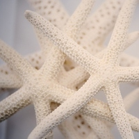 Starfish Wedding Decor
