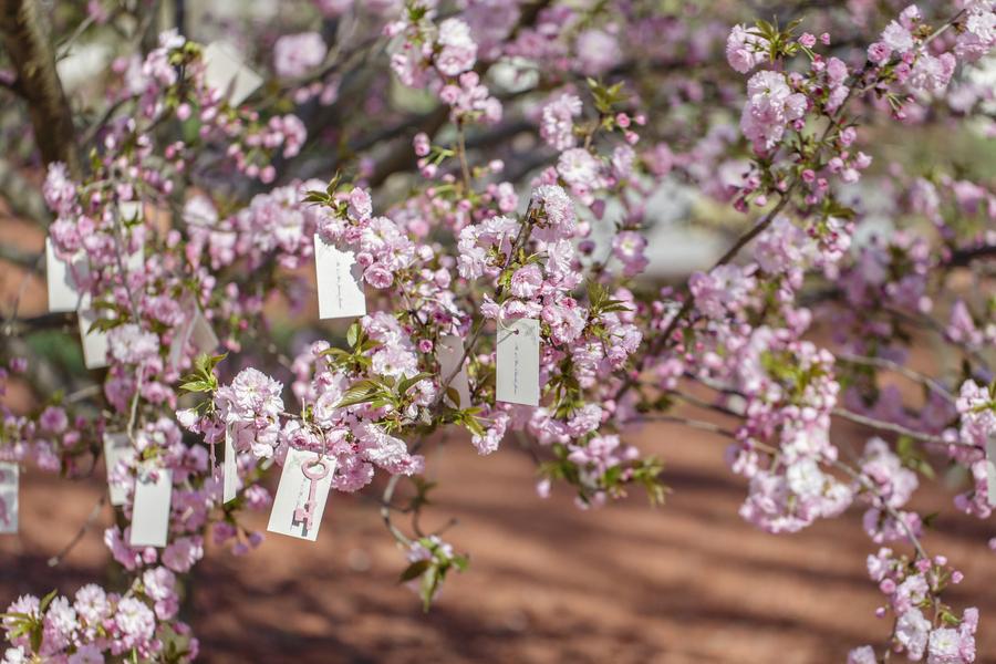Cherry Blossom Escort Cards