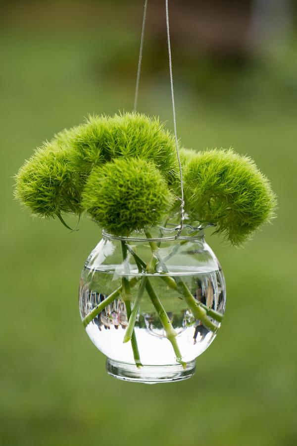 Hanging Greenery