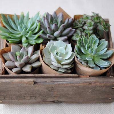 1394241490_photo_slider_succulent-favors-1