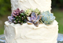 1394841080_thumb_succulent-wedding-cake-1
