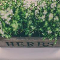 Herb Centerpieces