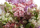 1397780014_thumb_lilac-bouquet