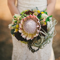 Protea and Air Plant Centerpiece