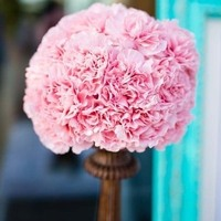 Pink Carnations