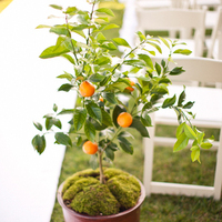 Citrus Tree Aisle Marker