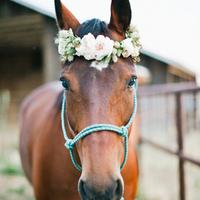 Hi Horsey!