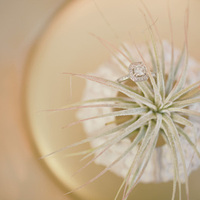 Air plant wedding favors by robincharlotte.