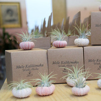 air plants with custom boxes by robincharlotte