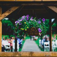 Hanging Garden Flowers