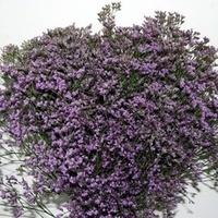 Baby's breath- purple