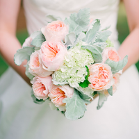 Garden Roses and Dusty Miller