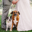 1415632817 thumb photo preview pantaleo haverkamp audra starr photography 20140503sarahdavewedding004 low