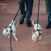 Puppies at the Ceremony