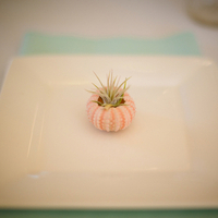 Sea Urchin Place Settings