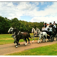Plan your equestrian winter wedding
