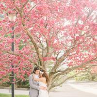 Blossoming Tree Backdrop
