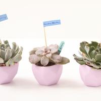 DIY: Garden Style Succulent Favors
